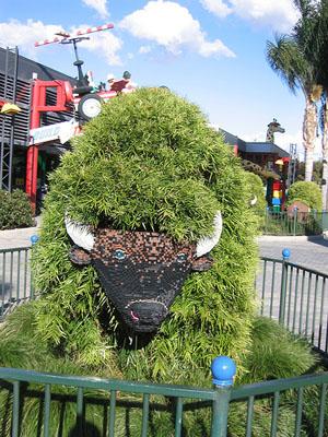 chia buffalo
